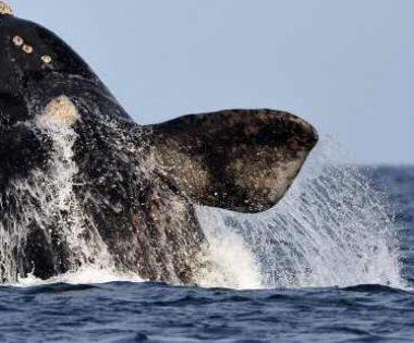 La divertida vida de una bióloga que estudia a las ballenas